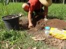 Treeplanting-1